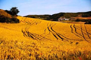 10838-agricoltura-da-ue-bando-per-gruppi-di-dialogo-civile-696×462